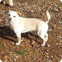 Adopt A Pet :: Kia - Linden, TN