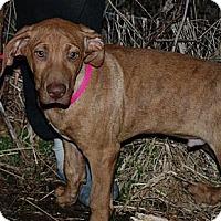 Adopt A Pet :: Kane - Albany, NY