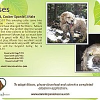 Adopt A Pet :: Moses - Ottawa, ON