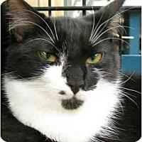 Adopt A Pet :: Rachel1 - Plainville, MA