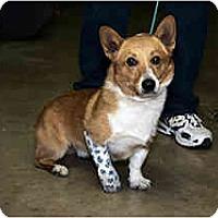 Adopt A Pet :: Yogi - Inola, OK