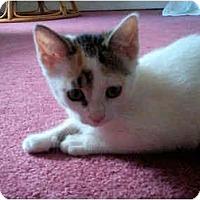 Adopt A Pet :: Sookie - Colmar, PA