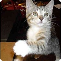 Adopt A Pet :: Libby - Irvine, CA