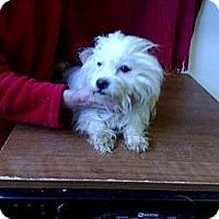 Adopt A Pet :: Tally - Seattle, WA