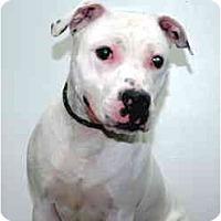 Adopt A Pet :: Zeus - Port Washington, NY
