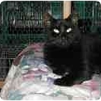 Adopt A Pet :: Buzzi - Pascoag, RI