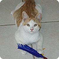 Adopt A Pet :: Derby - Ogallala, NE