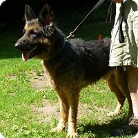 Adopt A Pet :: Gaston - Mill Creek, WA