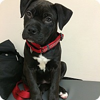 Adopt A Pet :: FRANKIE - Dennis, MA