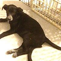 Adopt A Pet :: Brian - Homer, NY