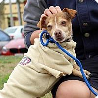 Adopt A Pet :: Ramon - Costa Mesa, CA