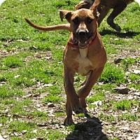 Adopt A Pet :: Bo - Oakland, AR