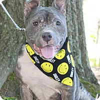 Adopt A Pet :: Smiley - Snellville, GA