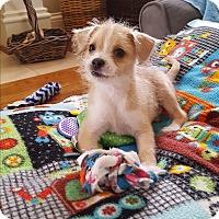Adopt A Pet :: Chester - Homewood, AL