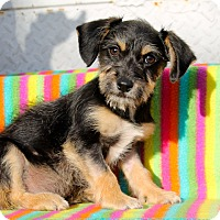 Adopt A Pet :: Frito - Los Angeles, CA