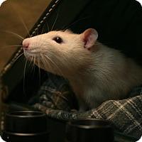 Adopt A Pet :: JIMBO - Philadelphia, PA