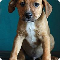 Adopt A Pet :: Damian - Waldorf, MD