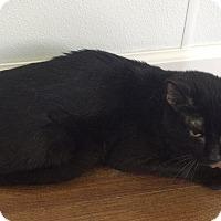 Adopt A Pet :: Zooks - Greensburg, PA