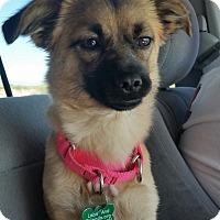 Adopt A Pet :: Maddy - Burbank, CA