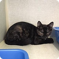 Adopt A Pet :: Zaggy - Fort Collins, CO
