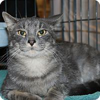 Adopt A Pet :: Moon - Rochester, MN