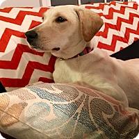 Adopt A Pet :: Virginia - Woodstock, GA
