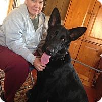Adopt A Pet :: Coal - Greeneville, TN