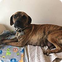 Adopt A Pet :: Naomi - Gallatin, TN