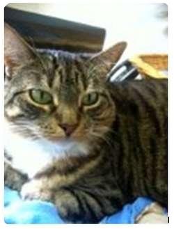Sphynx Cat Rescues In Louisiana
