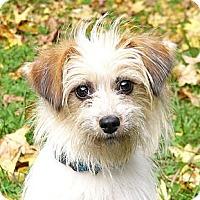 Adopt A Pet :: Spring - Mocksville, NC