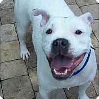 Adopt A Pet :: Georgia - Jacksonville, FL