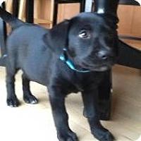 Adopt A Pet :: Roxy - Hancock, MI