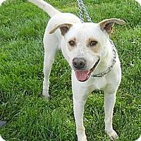 Adopt A Pet :: Pip - PENDING! - kennebunkport, ME