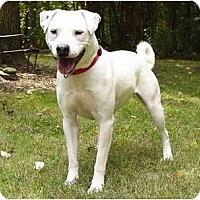 Adopt A Pet :: Kramer - Mocksville, NC