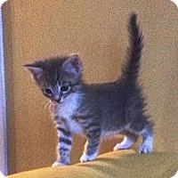 Adopt A Pet :: Ranger - Island Park, NY