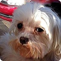 Adopt A Pet :: KELLY in Wichita, KS. - Seymour, MO