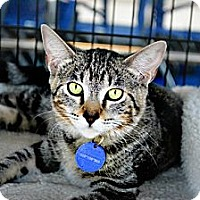 Adopt A Pet :: Tiger Lilly - Temecula, CA