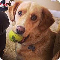 Adopt A Pet :: Dixie - Foster, RI