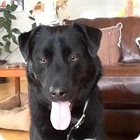 Adopt A Pet :: Cooper - Saskatoon, SK