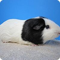 Adopt A Pet :: Chicago - Aurora, CO