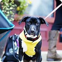 Adopt A Pet :: Rita - Charlotte, NC