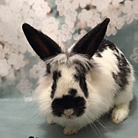 Adopt A Pet :: Spencer - Auburn, CA