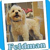 Adopt A Pet :: Feldman Trumbull - Pataskala, OH