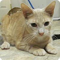 Adopt A Pet :: Peanut - Covington, KY