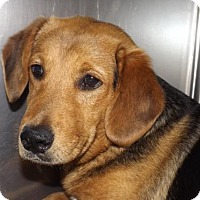 Adopt A Pet :: Conway - Oxford, MS