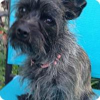 Adopt A Pet :: Sanka - Elkhart, IN