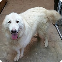 Adopt A Pet :: Katie - Kyle, TX