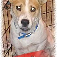 Adopt A Pet :: Sandy - San Bernardino, CA