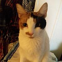 Adopt A Pet :: Zoey - Cerritos, CA