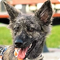Bernese Mountain Dog Mix Dog for adoption in San Francisco, California - Elisa